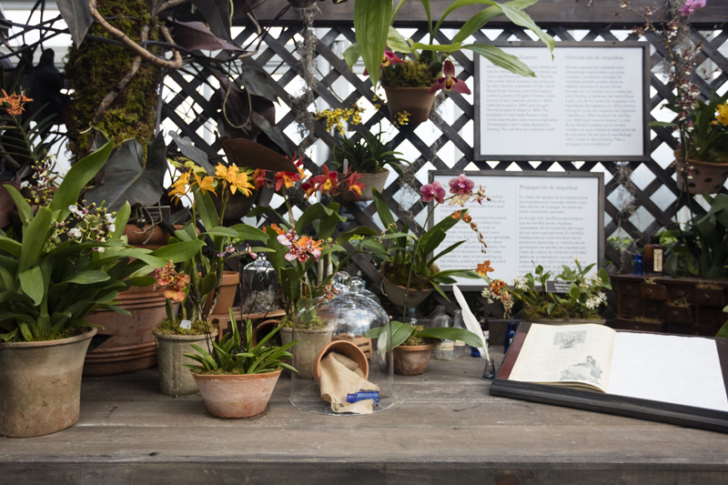 The New York Botanical Gardens Orchid Show - Top 6 Tips for Planting the Perfect Spring Garden