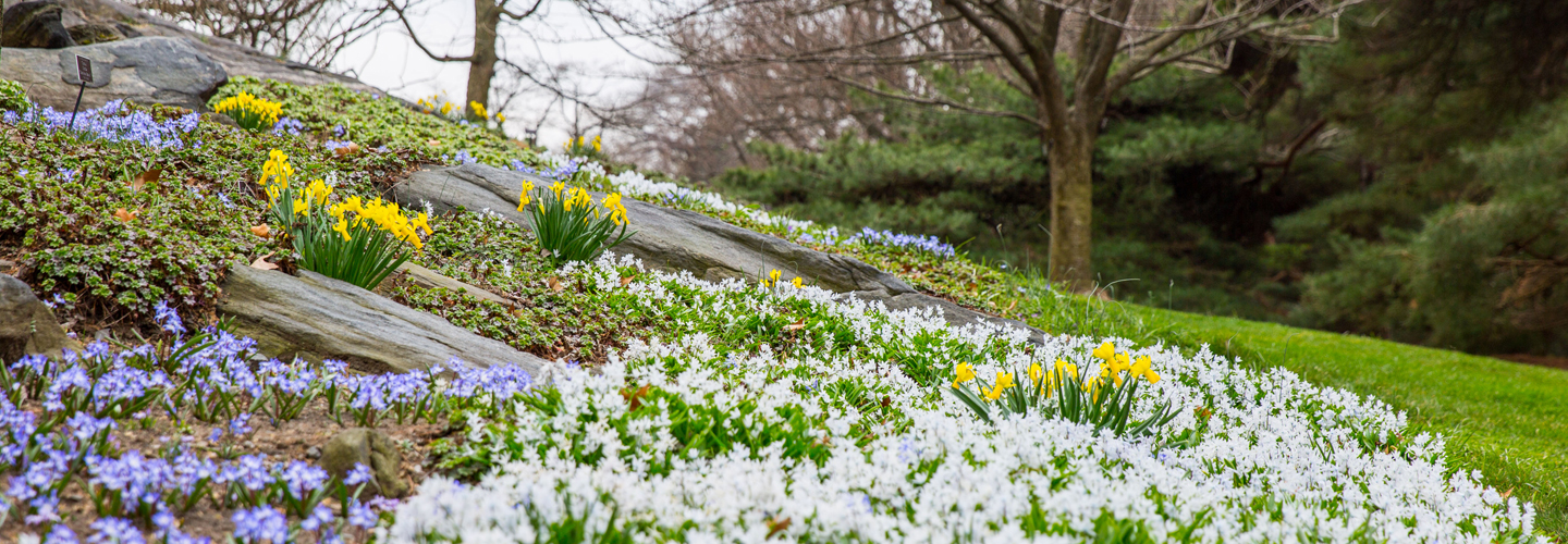 Top 6 Tips for Planting the Perfect Spring Garden