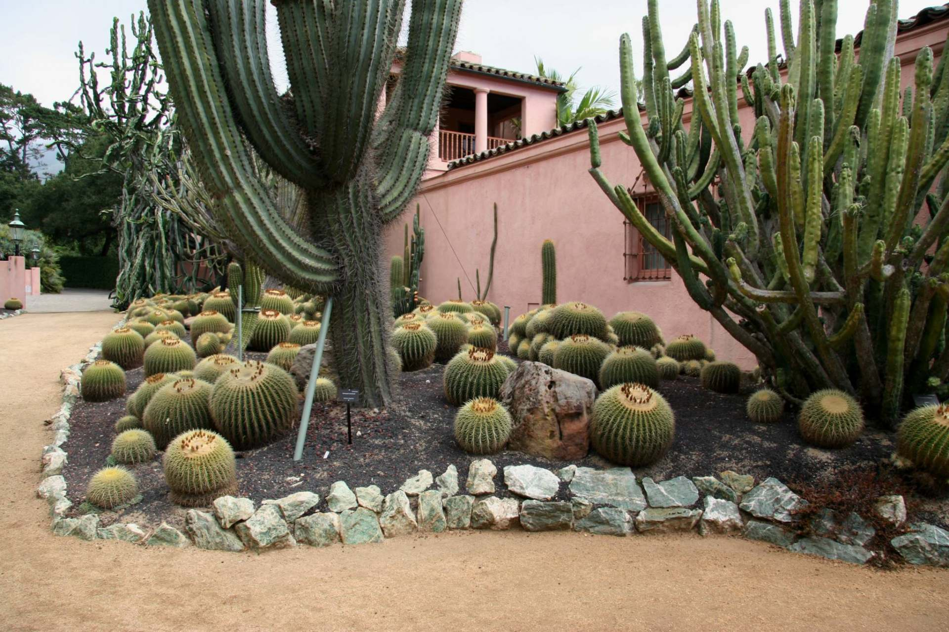Flickr_-_brewbooks_-_Cacti_and_euphorbia_garden,_Lotusland_(1)